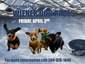 Peoria Rivermen Wiener Dog Races on Ice  4/3